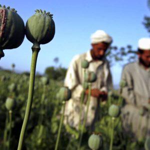 Opium-zavisimost