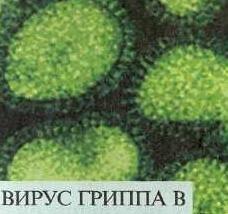 virus grippa b