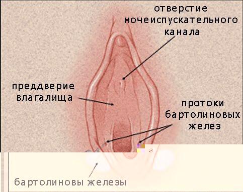 bartolievi-zhelezi