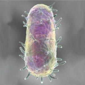 pseudotuberculosis