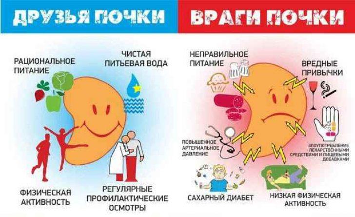 Диета при заболеваниях почек - Диеты и