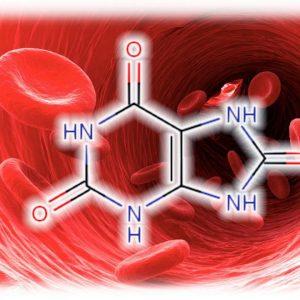 povyshennaja-mochevaja-kislota-v-krovi12