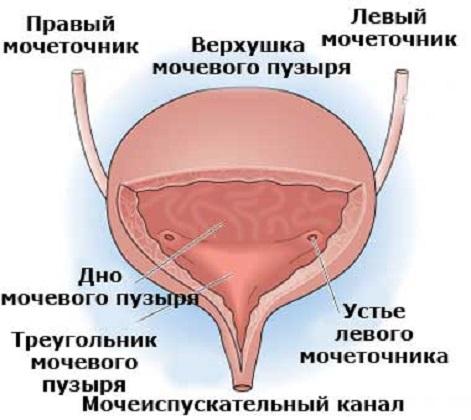 Интерстициальный цистит симптомы диагностика и лечение