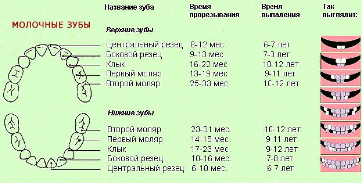Выпадение молочных зубов у детей температура