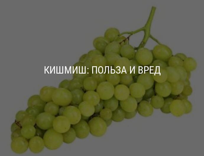 Польза черного винограда для организма человека.