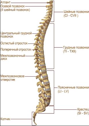 Головная боль при остеохондрозе шейного отдела позвоночника симптомы лечение