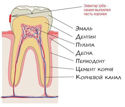 Как снять зубную боль: возможные причины боли и немедикаментозные ...
