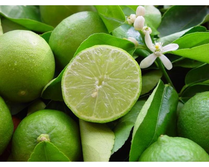 Лайм: описание и сорта, состав и калорийность, польза и применение лайма