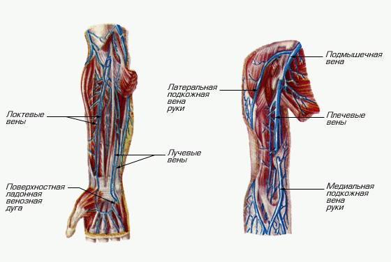 симптомы тромбоза вен
