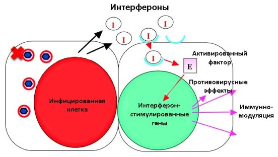 interferon action