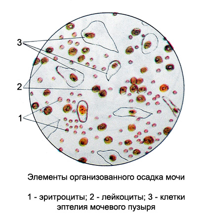 moca_analiz_microscopia