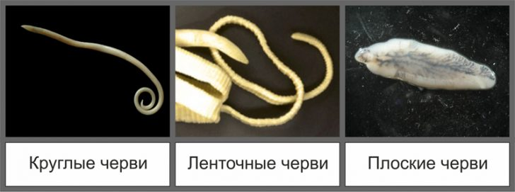 vidy-glistov-u-koshek