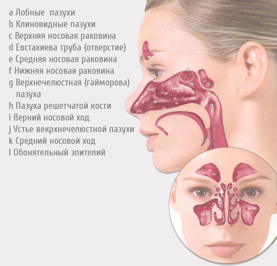 1358962733_anatomiya-nosa