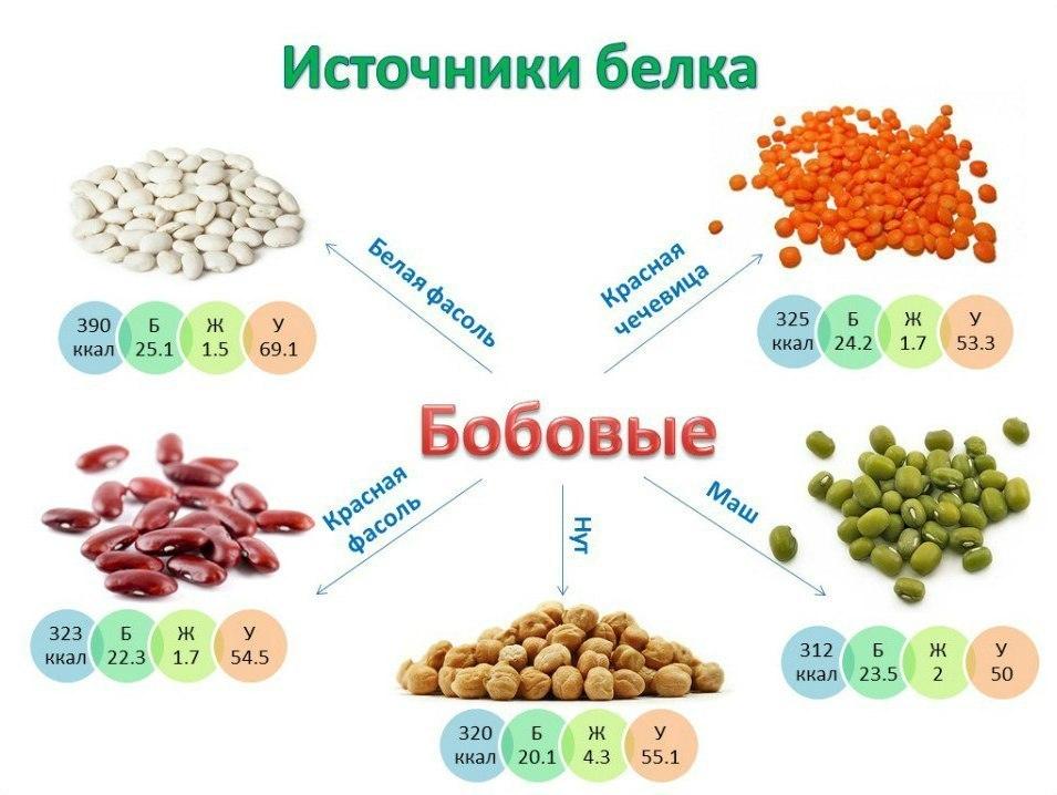 В каких растениях содержится белок