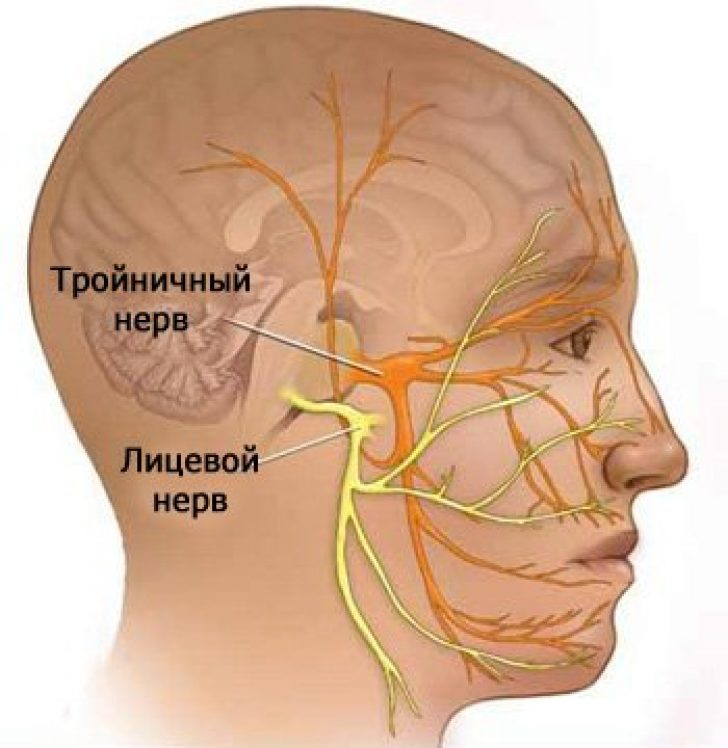 Diagram picture facial nerves, asian low carb recipestures