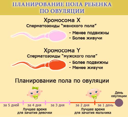 Planirovanie-pola-rebenka-po-dnyam