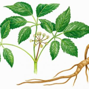 ginseng-roots