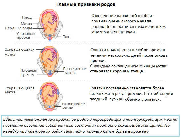 osnovniye-priznaki-rodov